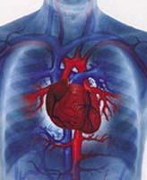 сердце5 (328x400, 37Kb)