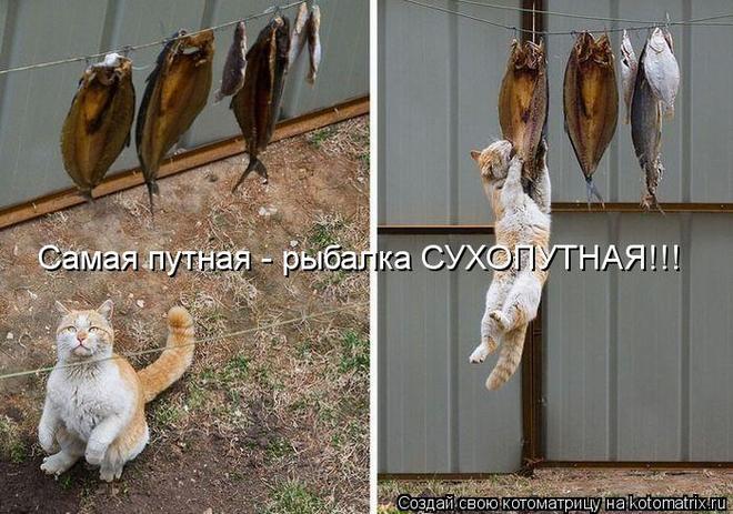 kotomatritsa_8l (660x463, 68Kb)