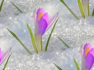 vesna_vesennie_peyzagi_foto (300x225, 18Kb)