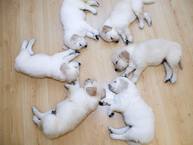 cute-puppies (670x503, 35Kb)