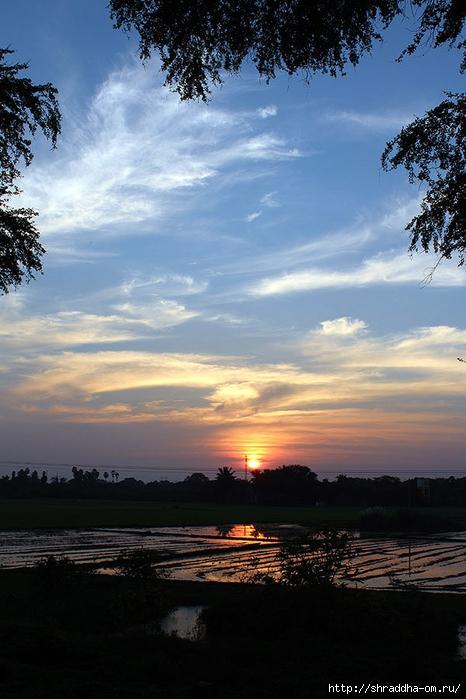 Индия, штат Тамилнад, Птичий заповедник, 54 (466x700, 245Kb)