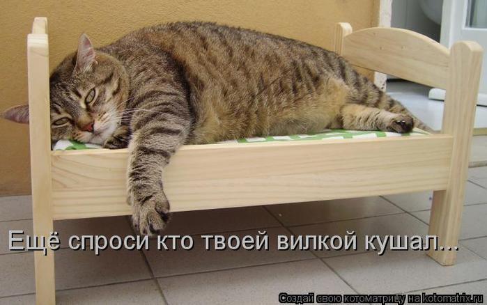 kotomatritsa_JZ (700x438, 47Kb)