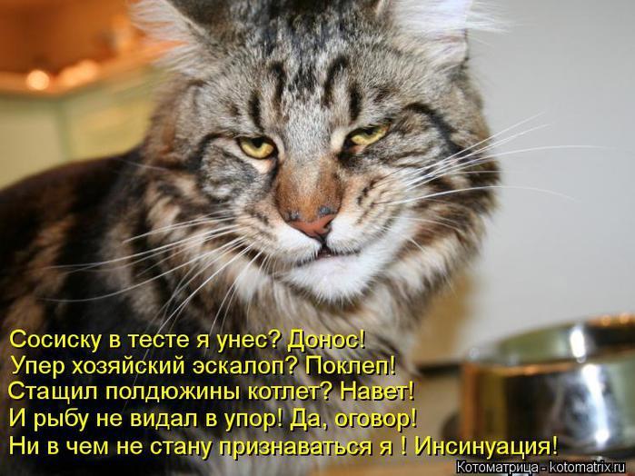 kotomatritsa_MD (700x524, 68Kb)
