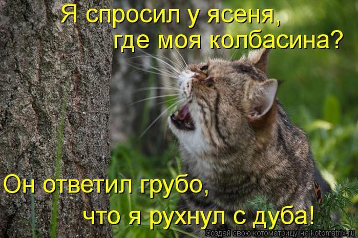 kotomatritsa_r0 (700x465, 77Kb)