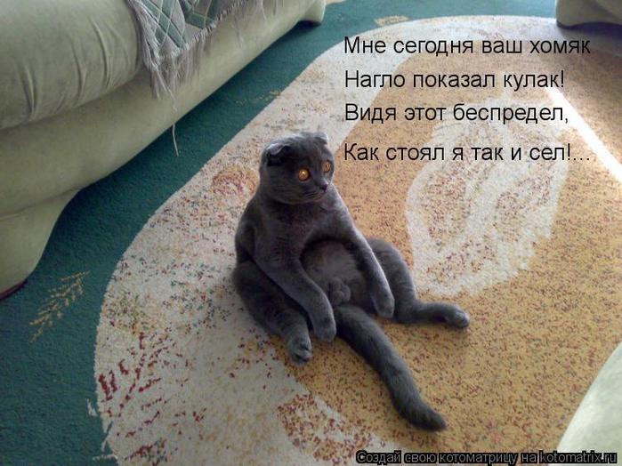 kotomatritsa_sW (700x524, 68Kb)