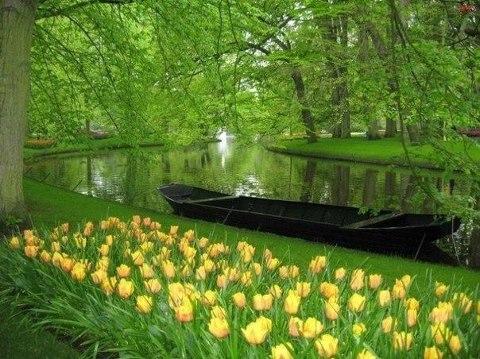 Кёкенхоф — всемирно известный королевский парк цветов в Нидерландах (480x359, 61Kb)