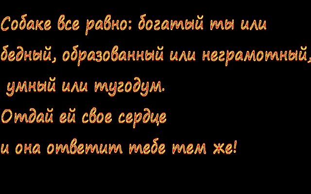 3821971_sobaka (640x400, 29Kb)