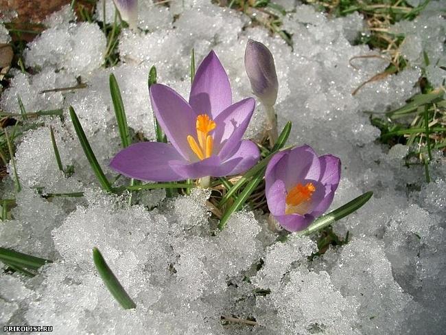 Сейчас весна!/1363298446_5 (650x488, 169Kb)