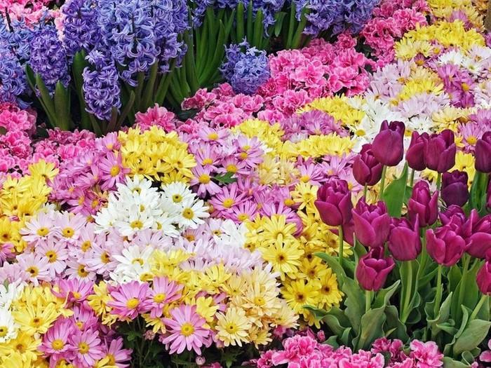Цветы для клумбы непрерывного