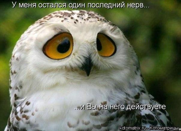1363372406_yeE5b4r1734 (604x439, 54Kb)