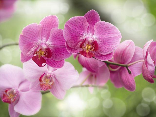 орхидея (640x480, 41Kb)