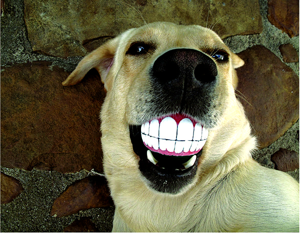 3925073_SmilingDogBall_01 (600x467, 310Kb)
