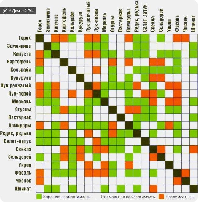 Несмотря на то, что пользоваться таблицей совместимости овощных культур очень просто она дает потрясающий результат.