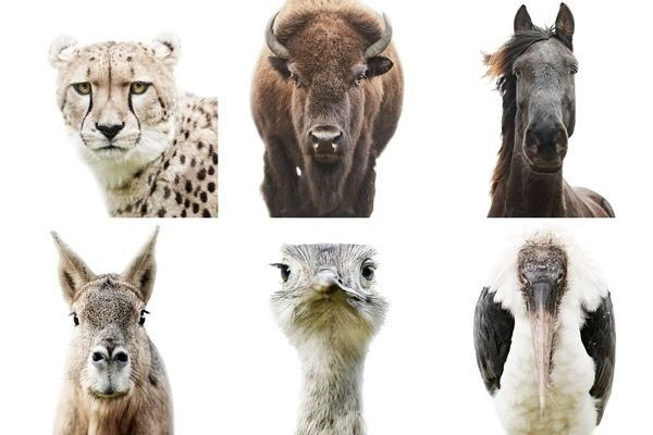 ANIMAL PORTRAITS MORTEN KOLDBY PHOTOGRAPHY0