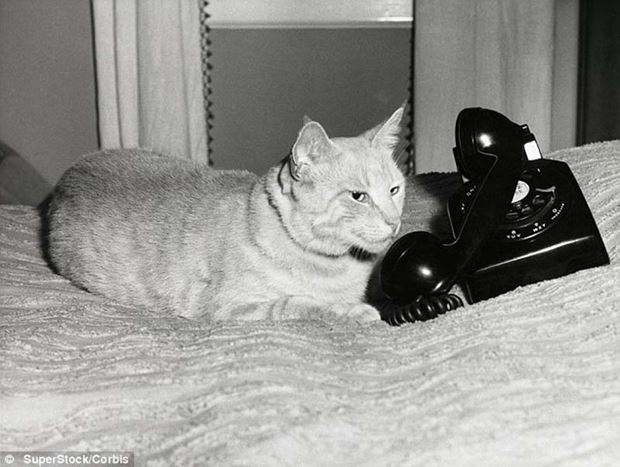 original cats 12 (620x467, 49Kb)