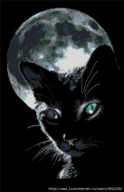 Часть 39 - Черный кот.