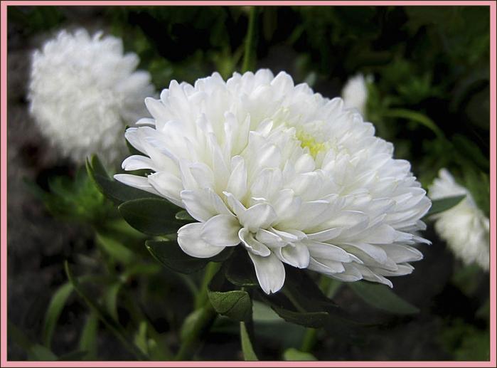 Цветы Цветы Букеты flowers ast…
