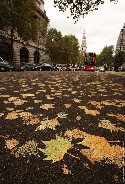 leaves-carpet-51 (477x700, 156Kb)