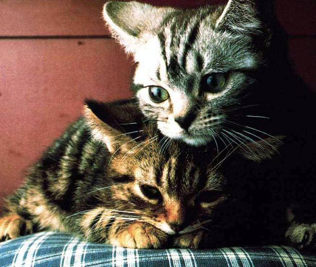Не грусти... Нас отдадут разным хозяевам, но мы все равно никогда не забудем друг друга...