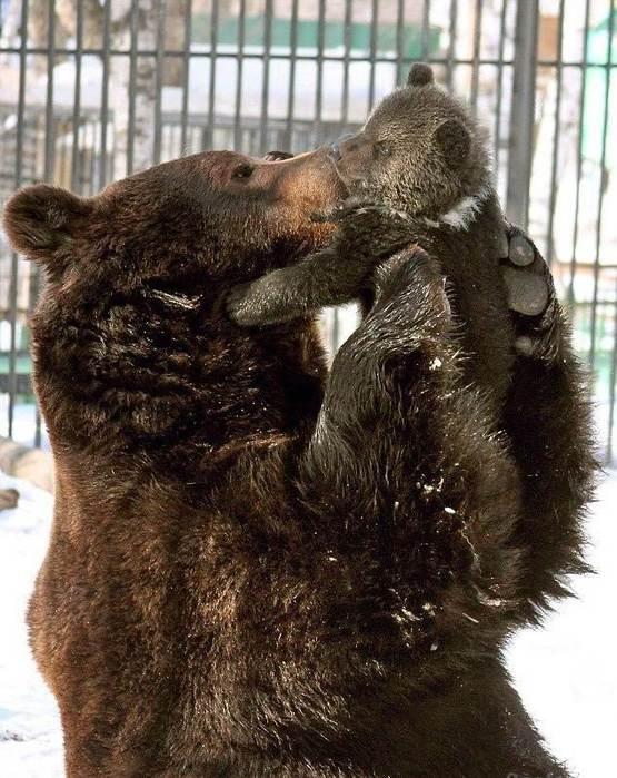 прикольные фото медведей (555x700, 75Kb)