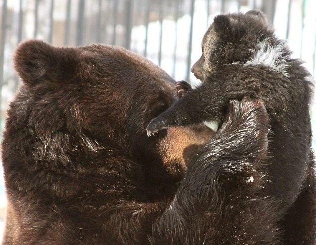прикольные фото медведей 1 (634x491, 99Kb)