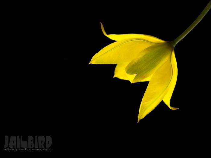 Jailbird.Ru_0515 (700x525, 54Kb)