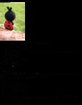 Превью 423 (551x700, 185Kb)