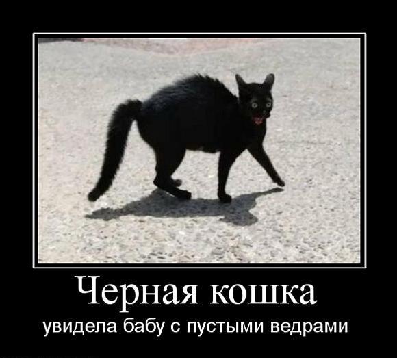http://img1.liveinternet.ru/images/attach/c/7/98/737/98737985_DDF7F83CA85118D0C5CDF6146E1BAC4B.jpg