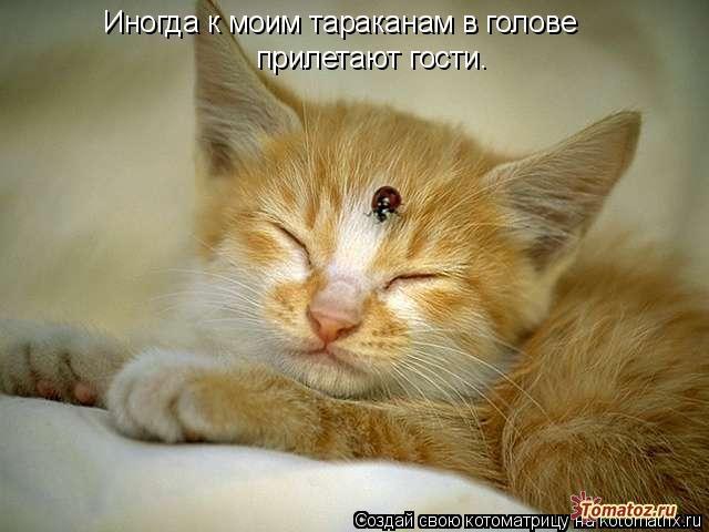 http://img1.liveinternet.ru/images/attach/c/7/98/738/98738333_1363769316_1.jpg