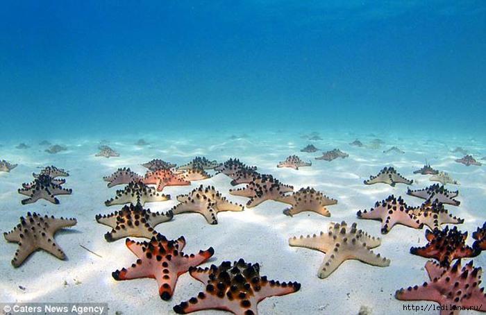 яркие краски мира дно морское (700x454, 181Kb)
