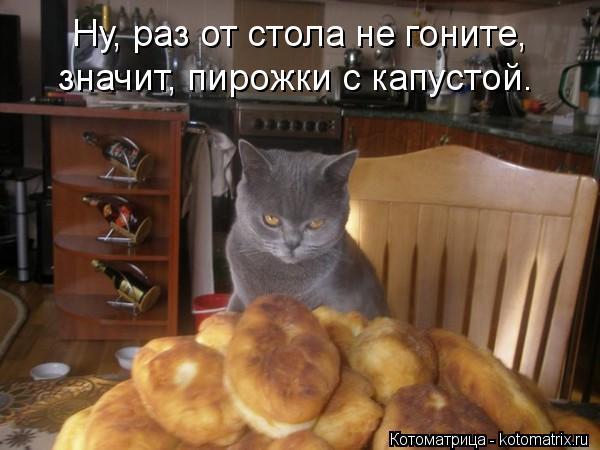 kotomatritsa_1h (600x450, 42Kb)