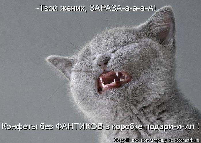 kotomatritsa_gM (700x500, 57Kb)