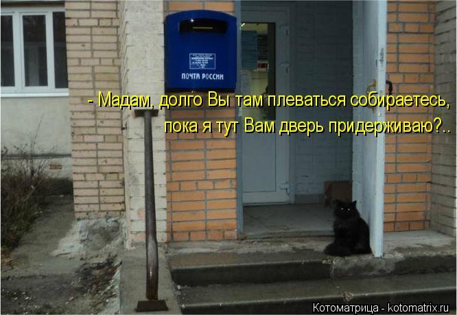 kotomatritsa_LP (666x459, 52Kb)