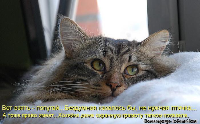 kotomatritsa_O (700x434, 52Kb)