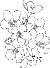cherry-blossoms (200x275, 15Kb)