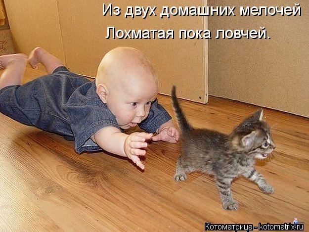 kotomatritsa_0z (625x469, 57Kb)