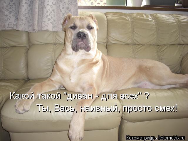 kotomatritsa_9b (640x480, 45Kb)