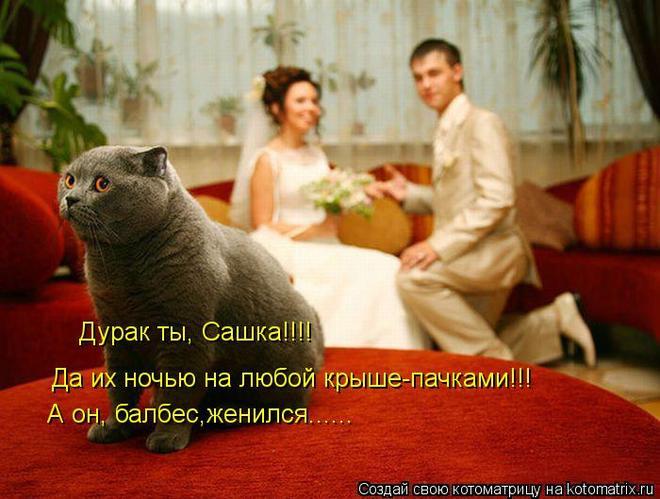 kotomatritsa_b (660x499, 53Kb)