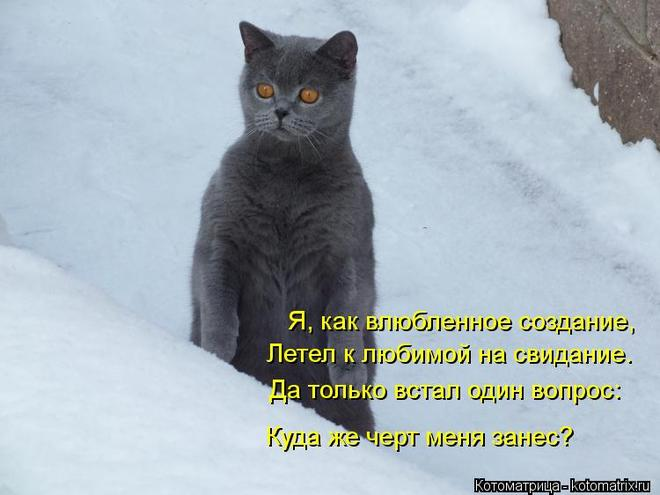 kotomatritsa_hm (660x495, 37Kb)