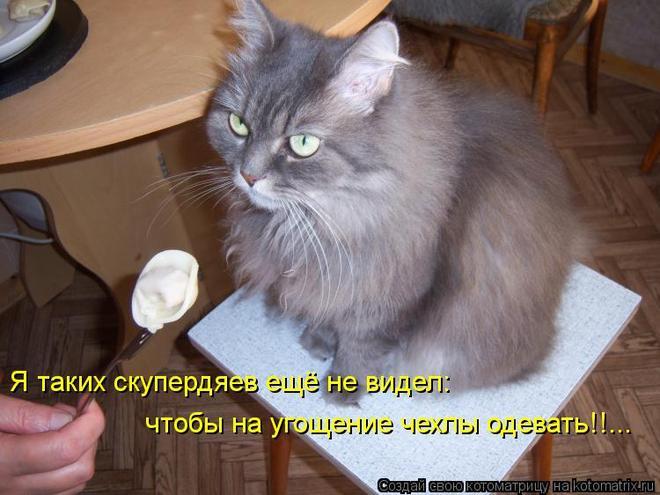 kotomatritsa_ns (660x495, 51Kb)