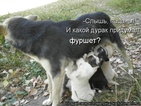 kotomatritsa_rs (600x449, 52Kb)