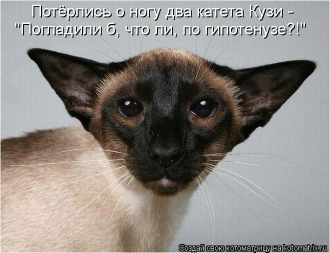 kotomatritsa_yl (660x506, 54Kb)