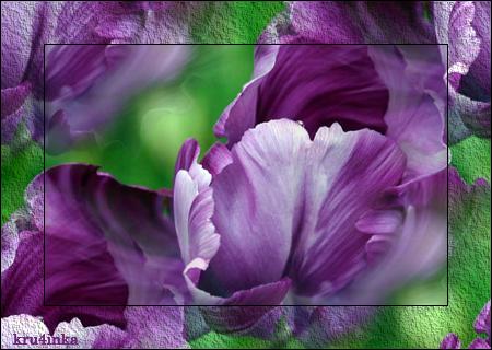 Тюльпаны-фиолетовые (450x320, 297Kb)