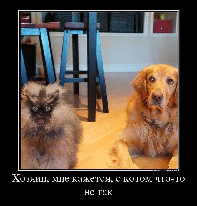 Кот и Пёс (670x700, 79Kb)