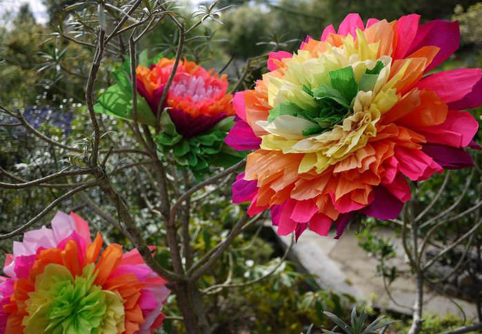 crepeflower18 (700x485, 78Kb)