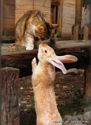 1270750002_cat-and-rabbit (299x411, 35Kb)