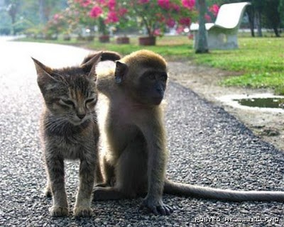 1270750076_cat-and-monkey (400x320, 44Kb)