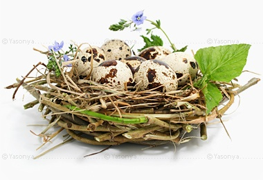 яйца перепелиные (380x261, 46Kb)