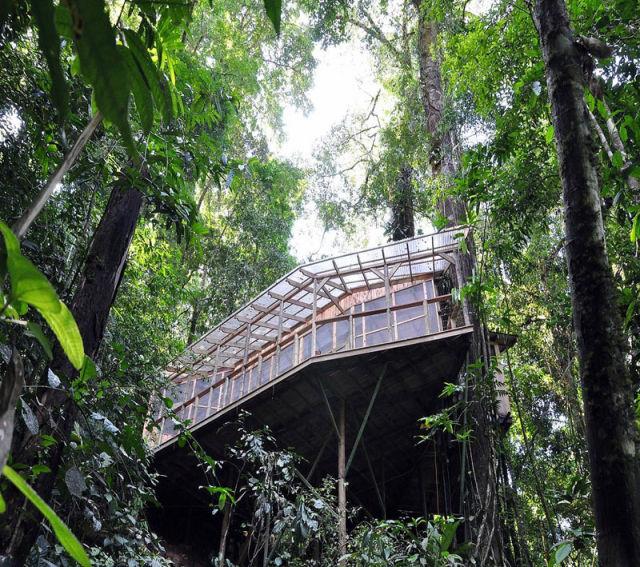 отель на деревьях 2 (640x567, 145Kb)