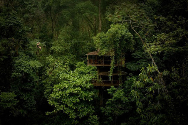 отель на деревьях 6 (640x424, 68Kb)